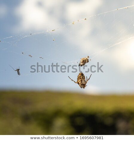 Makro Spinne Spinnennetz gelb arbeiten neue Stock foto © aetb