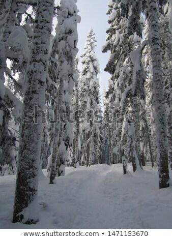 Bomen diep sneeuw winter boom hout Stockfoto © chrisga