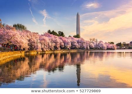 Washington Memorial and cherry trees Stock photo © rmbarricarte