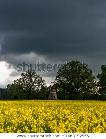 Old windmill at a blossom rapeseed field Stock photo © olandsfokus