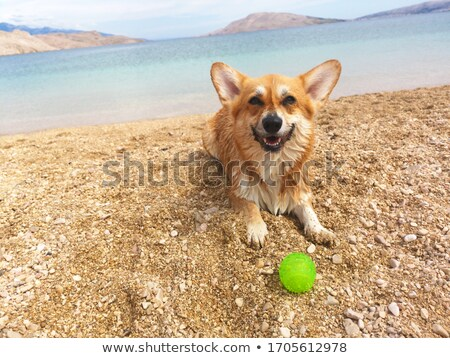 Dog Play With Ball In Water Copy Space Stock photo © Nelosa
