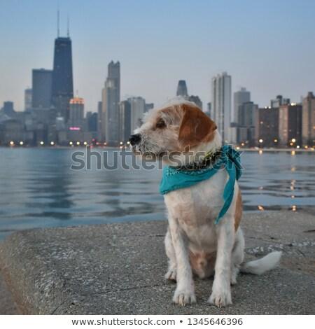 タウン · シカゴ · 表示 · 周りに · ミシガン州 · オフィス - ストックフォト © benkrut