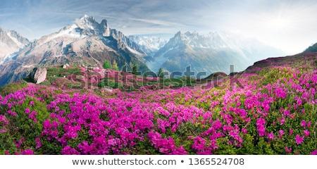 spring in mountains stock photo © kotenko