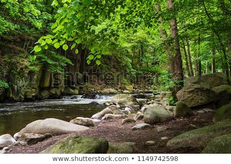 лес Германия Nice ходьбе горные деревья Сток-фото © compuinfoto