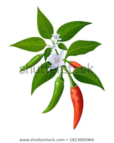Red chili pepper isolated. EPS 10 Stock photo © beholdereye
