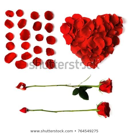 coração · buquê · rosas · vermelhas · isolado · branco - foto stock © andreasberheide