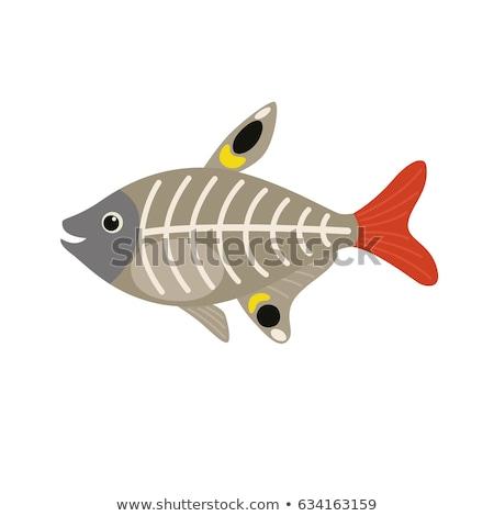 XRay Tetra Fish Cartoon Character Stock photo © Krisdog