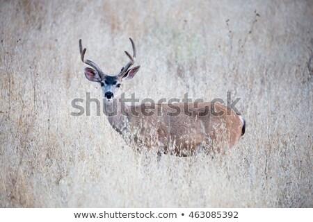 veado · ponto · San · Francisco · Califórnia · EUA · natureza - foto stock © dirkr