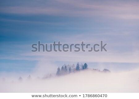Najaar landschap mist sparren bomen vallen Stockfoto © Kotenko