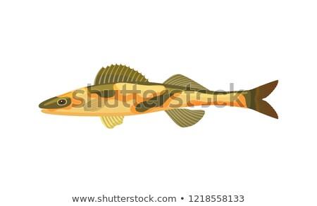 Ingesteld tropische dieren vis verschillend Stockfoto © robuart