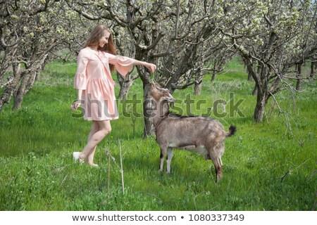 blonde girl feeding goat in the flower garden stock photo © ruslanshramko