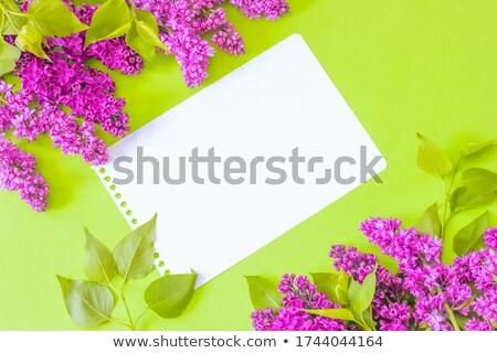 Marco lila flores hoja notas hojas Foto stock © Kotenko