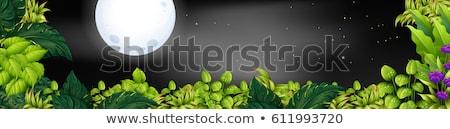 cena · jardim · ilustração · grama · madeira · floresta - foto stock © colematt