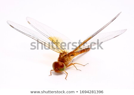 A dragonfly on white background Stock photo © bluering