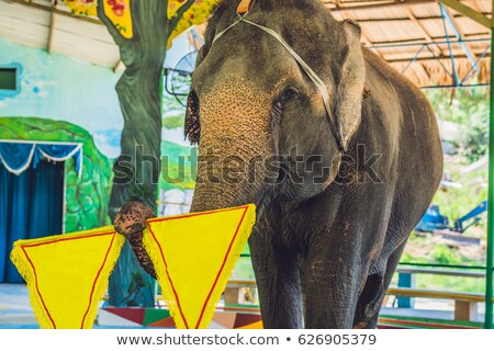 The elephant holds a yellow tissue of a copy of the space Stock photo © galitskaya