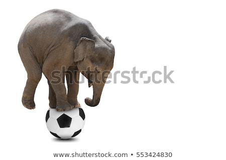 Fútbol elefante Cartoon ilustración jugando fitness Foto stock © bennerdesign
