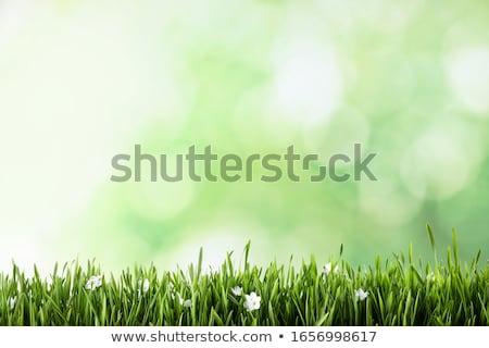Tavasz nyár virágzó mező legelő virágok Stock fotó © dmitry_rukhlenko