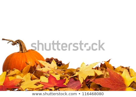 Gumleaf fall Stock photo © lovleah
