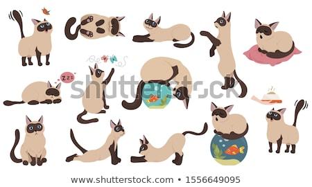 寝 シャム猫 詳細 猫 ストックフォト © ivonnewierink