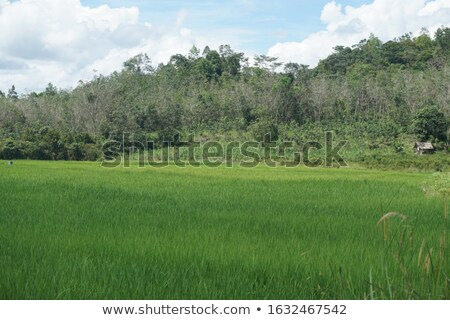 Paddy Field by the Hill Side Stock photo © azamshah72