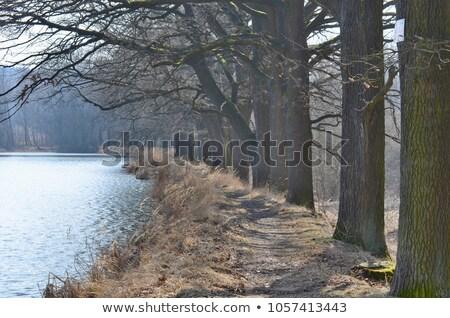 Colheita lagoa República Checa árvore natureza outono Foto stock © phbcz