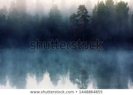 Stock photo: Misty forest to the rising day.
