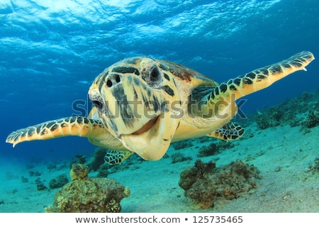 Черепахи лице черепахи Гондурас центральный Сток-фото © MojoJojoFoto