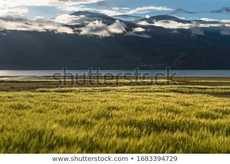 Lake Tsomoriri Stock photo © szefei