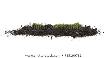 Green plant in a mound of ground Stock photo © boroda