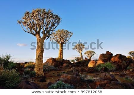 дерево пустыне Намибия алоэ пейзаж рок Сток-фото © TanArt