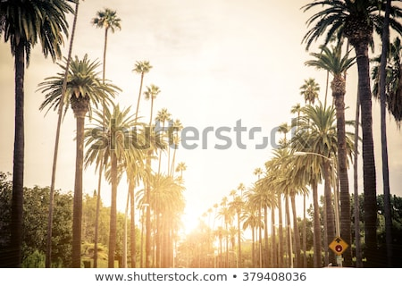 Beverly Hills, United States Stock photo © nito