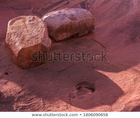 Vazio secar poeirento paisagem árvores Foto stock © Discovod