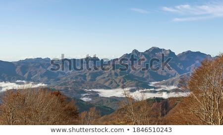 Valle verano vista italiano forestales naturaleza Foto stock © Antonio-S
