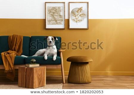 Psa jadalnia miłości drewna domu Zdjęcia stock © meinzahn