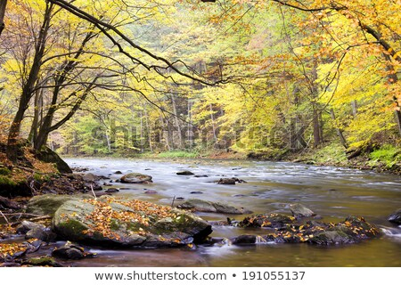 metuje river in autumn czech republic stock photo © phbcz