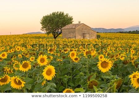 village in provence Stock photo © Dar1930