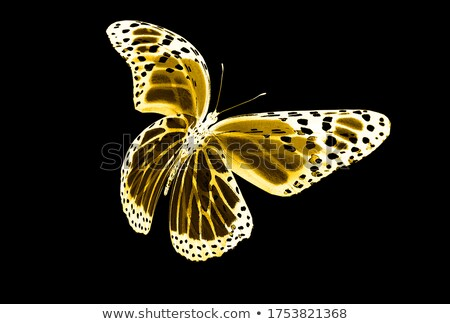 Colorful shadow of a butterfly Stock photo © Ustofre9