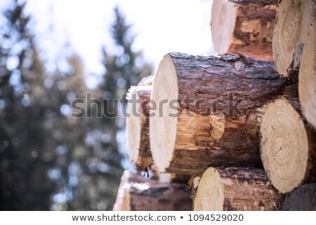 Wood logs in sun Stock photo © FOTOYOU