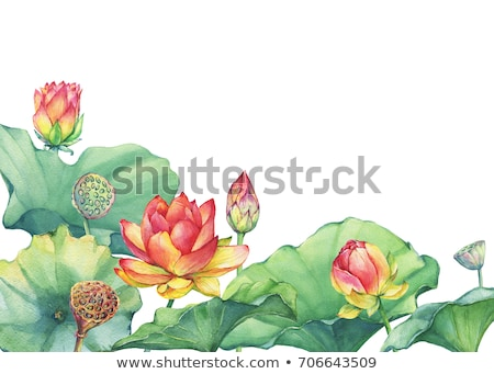 Stockfoto: Lotus Fruits Beautiful Pattern
