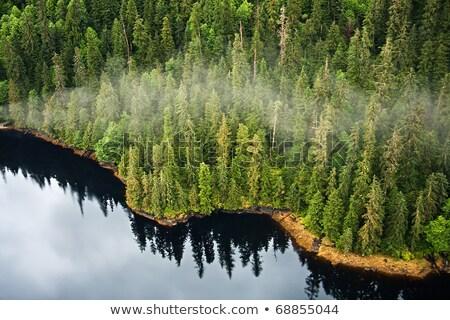 Sahil rainforest prens ses Alaska orman Stok fotoğraf © wildnerdpix