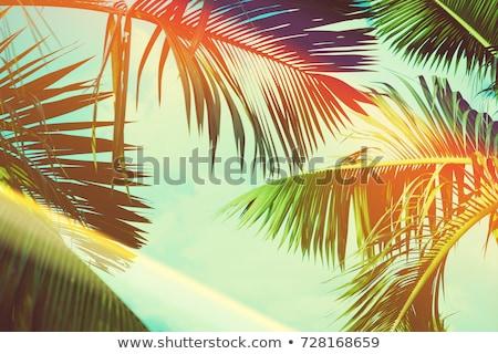Tropicales forestales palmeras cielo azul Cuba Foto stock © Klinker