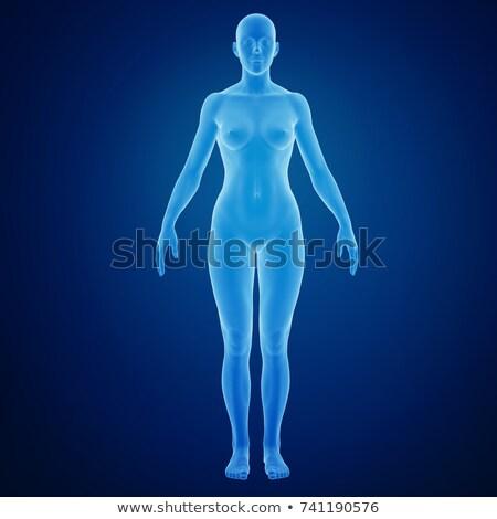 3D reso illustrazione femminile anatomia medici Foto d'archivio © maya2008