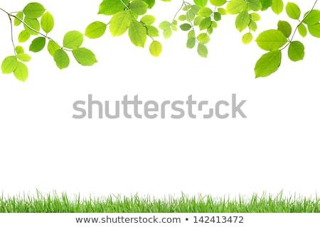 ярко · зеленые · листья · небе · дерево · лес · природы - Сток-фото © rufous