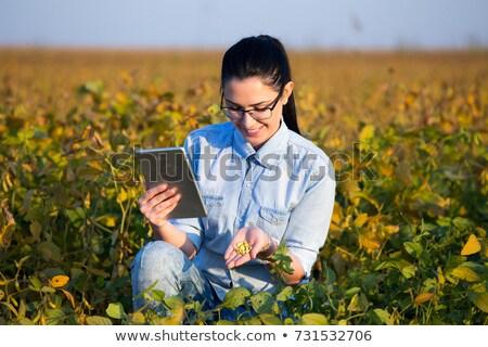 Stock fotó: Női · gazda · tart · szójabab · mag · fölött