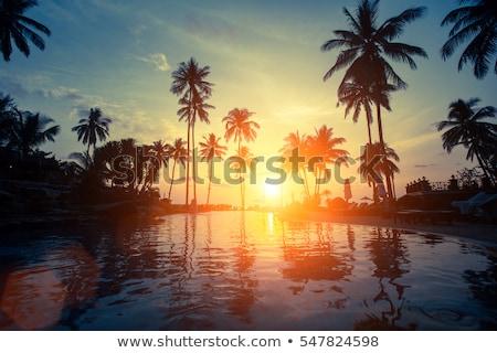Tropisch strand palmbomen vector cartoon illustratie hemel Stockfoto © orensila