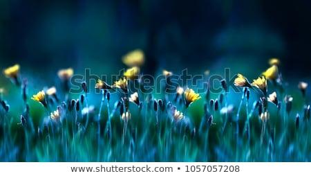 Полевые цветы области фон мира среде Сток-фото © IS2