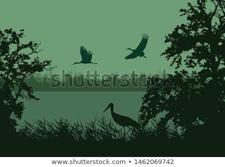 Leylek göl orman yürüyüş güzel büyük Stok fotoğraf © romvo