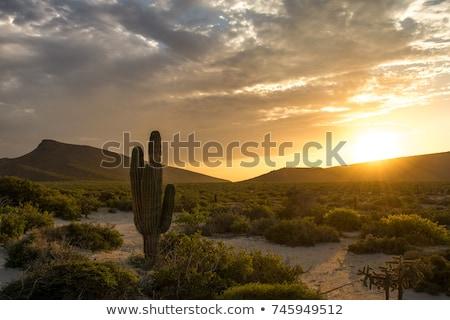 美しい · 山 · 砂漠 · 風景 · 背景 · 夏 - ストックフォト © vapi