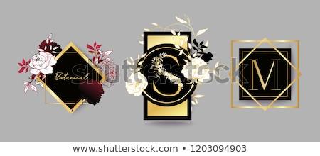 Botanikus terv logo sablonok szett négy Stock fotó © ivaleksa