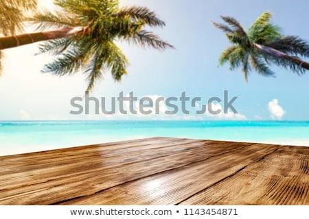 Foto stock: Dos · coco · árboles · ilustración · fondo
